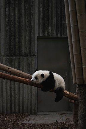 UYKUCU | PANDA