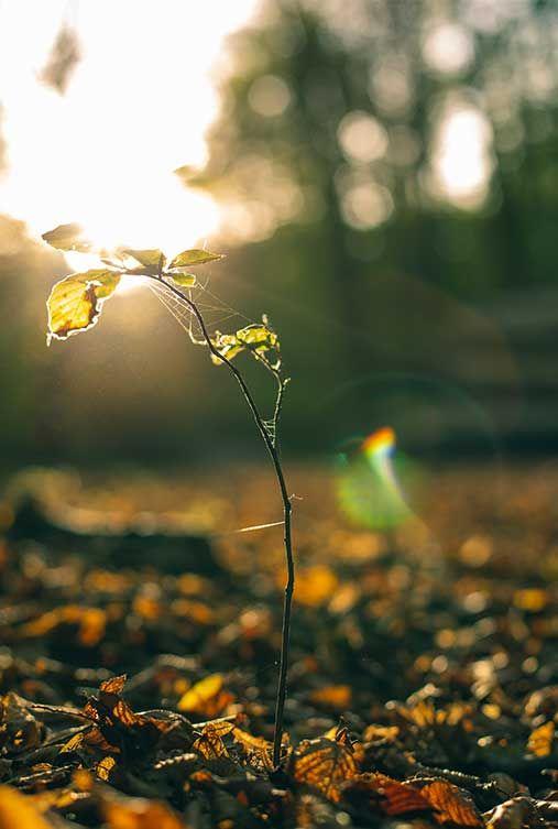 Doğayı Yeşillendir Geleceğini Renklendir