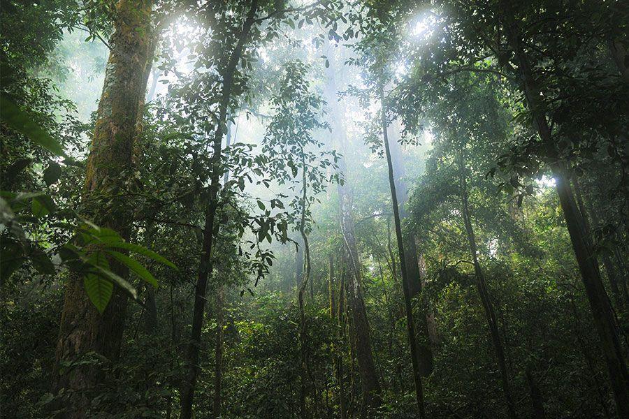 Amazon Yağmur Ormanları'na Keşif